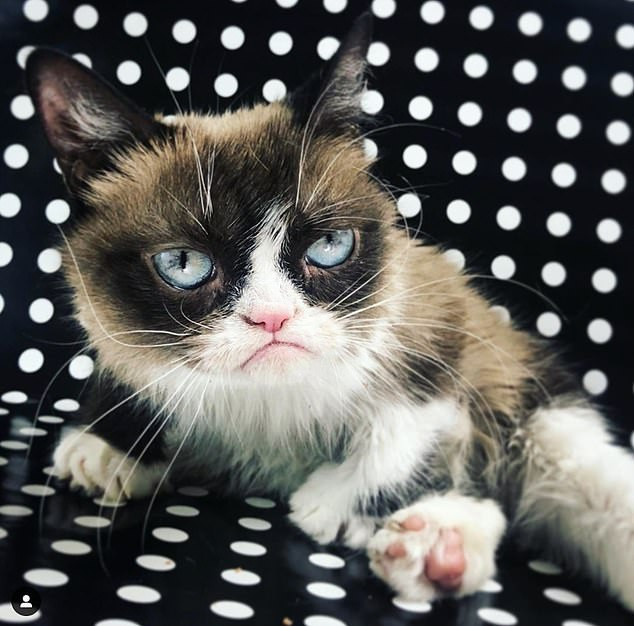 Grumpy Cat, the richest cat in the world with $100M fortune is dead