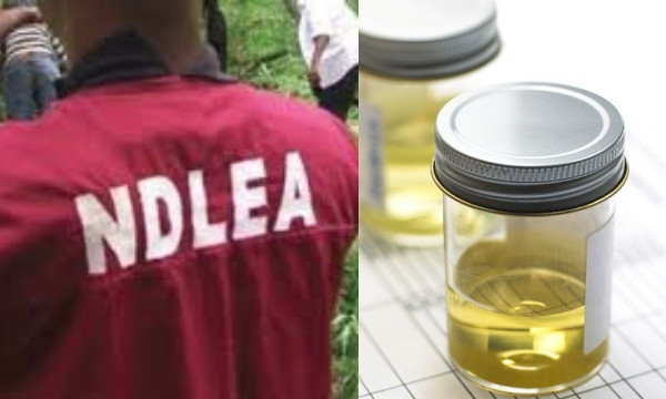 Nigerian youths now take processed urine to feel high  NDLEA lindaikejisblog