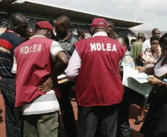 The National Drug Law Enforcement Agency (NDLEA) says it has seized and burnt over 14.3 tonnes of illicit drugs and crops in six different camps raided by its operatives in Ondo and Edo states. Mr Haruna Gagara, NDLEA Commandant in Ondo State, told newsmen in Akure that his team also apprehended a notorious cannabis merchant, Ohimai Ayodele, 51, in Uzebba, suspected to be the mastermind of the killing of NDLEA personnel earlier this year. Ayodeles men opened fire in an attempt to resist his arrest. Seven of our personnel got injured in the course of the incident and they are currently receiving treatment in the hospital, said the narcotic chief. Gagara further disclosed that the operatives also arrested a 66-year-old cannabis farmer in a deserted locality along Edo/Ondo border. He said that several cannabis nurseries and transplant farms were discovered and destroyed immediately while weapons were seized. The state commandant said the patrol also invaded Ajobieye forest in Ute, Ose Local Government Area of Ondo State in an operation that lasted about eight hours. This operation led to the burning of 1,225 bags of Cannabis Sativa, while 174.5 kilograms and samples of fresh plants were brought for prosecution purposes. I can assure Nigerians that the operation has caused a serious disruption in the drug market and has checked the likely influx of drugs during this Yuletide. The impact of the operation will be felt in the illicit drug market nationwide because about 80 per cent of cannabis market across the country obtain their cannabis supply from states touched by this operation. The agency is still awaiting drug merchants on the road to intercept cannabis shipments smuggled into the market. We will sustain the current effort, the NDLEA chief said. Gagara, who led the team, said the exercise, tagged Operation Thunder Strike IV, was launched by a joint task force comprising personnel of the agency from Oyo, Ekiti, Edo Ondo and Osun states and men of the Nigerian Army. The commandant said the intelligence-driven operation led to the seizure of tonnes of cannabis already harvested and heaped for onward movement to the illicit drug markets. He said his team visited two communities, Uzebba and Hikin, which were notorious for the cultivation of cannabis in Owan Local Government Area of Edo State, bordering Ondo State. He commended the efforts of the NDLEA personnel involved in the rigorous exercise and also lauded the Nigeria Army for the collaboration given during the exercise.
