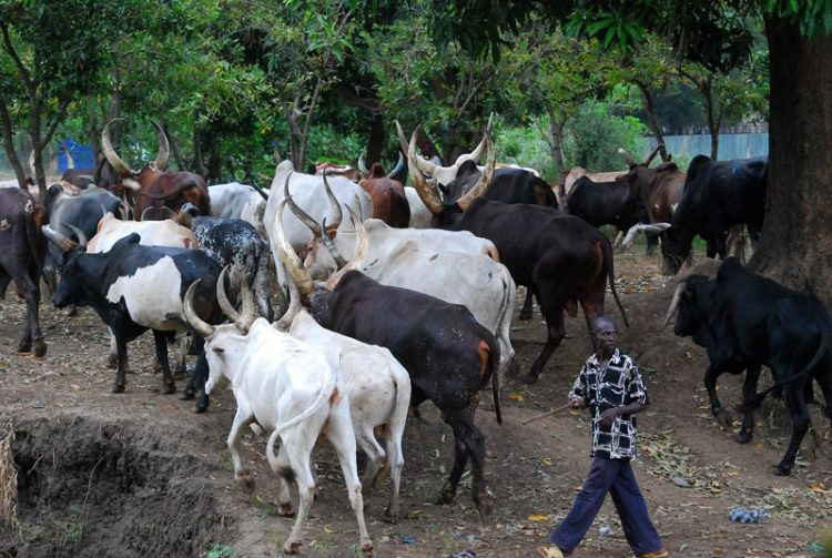 Middle-aged woman allegedly gang-raped by herdsmen in Anambra dies in Ebonyi