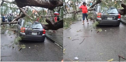No life lost after a big tree fell on a parked car in Calabar lindaikejisblog