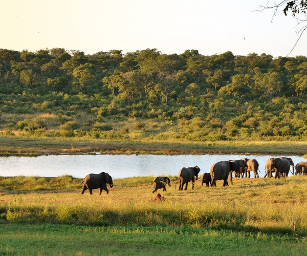 Chinese miners taken to court for mining in Zimbabwe's biggest game reserve lindaikejisblog