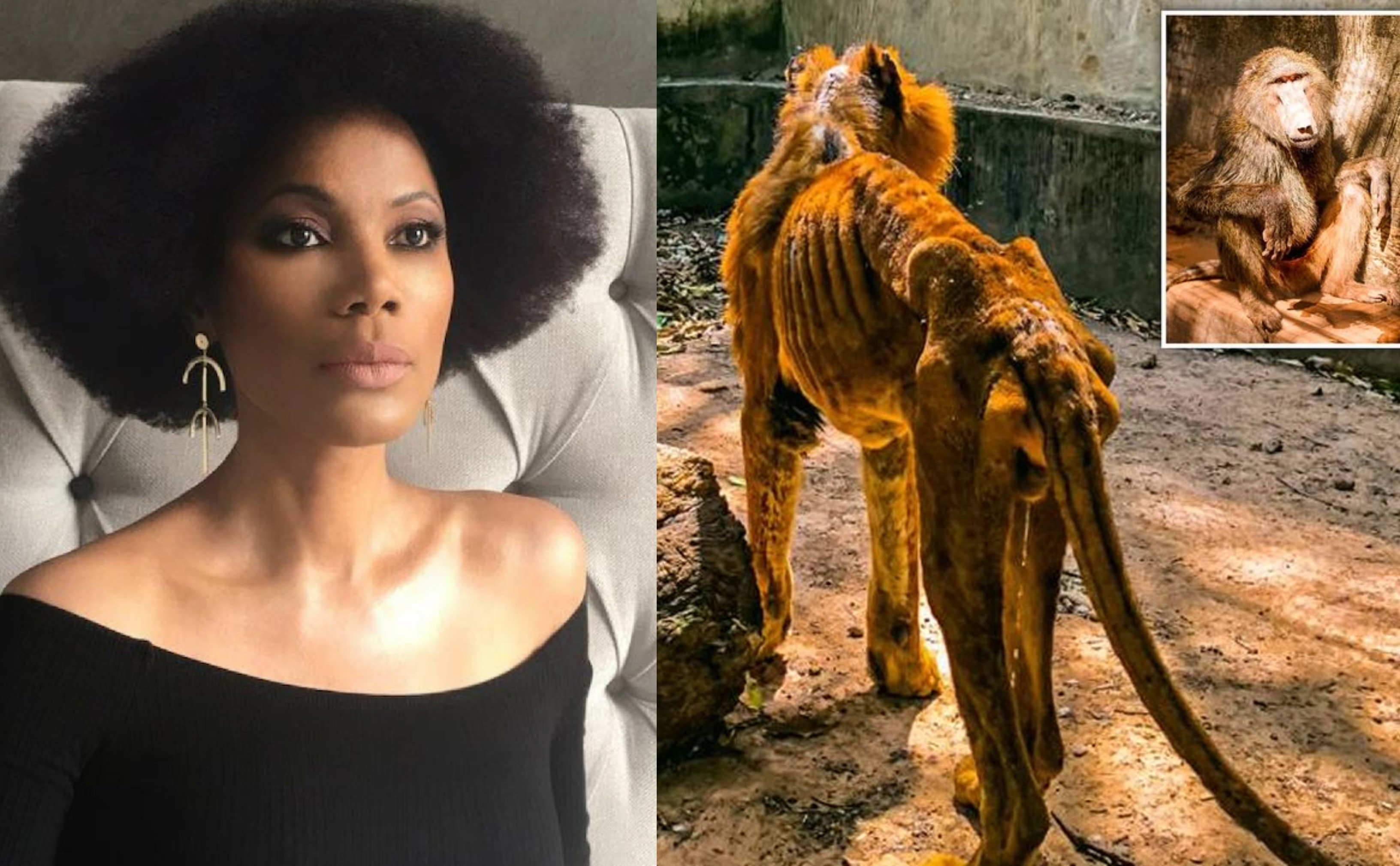 Such a strong society metaphor - Funmi Iyanda reacts to photos of starving lion and dozens of underfed animals at a Nigerian zoo lindaikejisblog