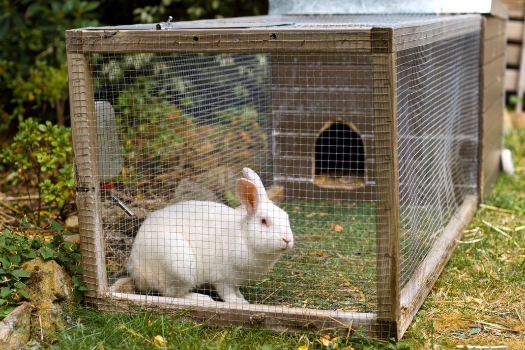 FG engages 17,000 youths in rabbit farming lindaikejisblog