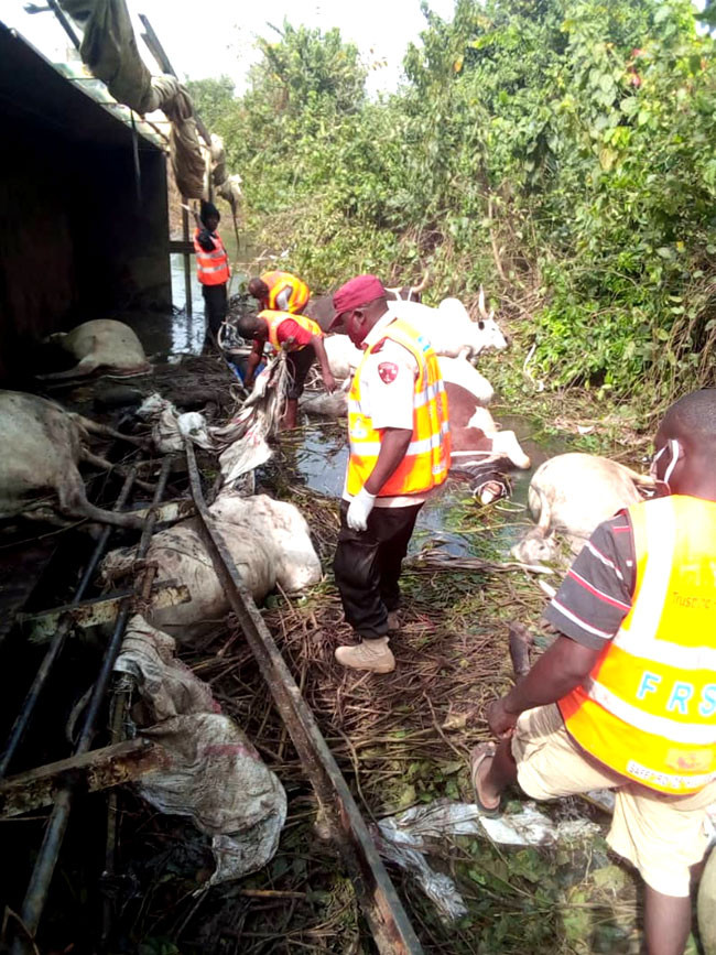 23 people killed after truck conveying humans and cows crashed in Niger state lindaikejisblog 4