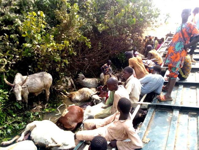 23 people killed after truck conveying humans and cows crashed in Niger state lindaikejisblog