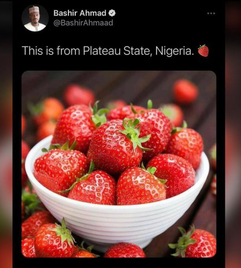 President aide Bashir Ahmad reacts after being called out for passing off Indian strawberries as strawberries from Plateau state lindaikejisblog 1
