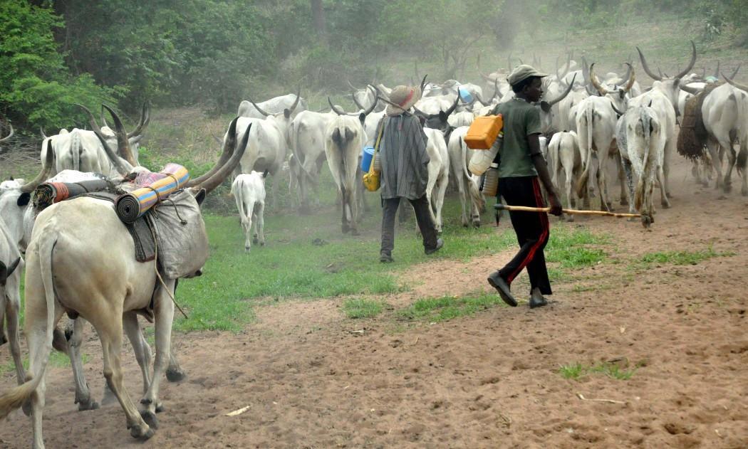 Were tired of open grazing it is now obsolete - Miyetti Allah