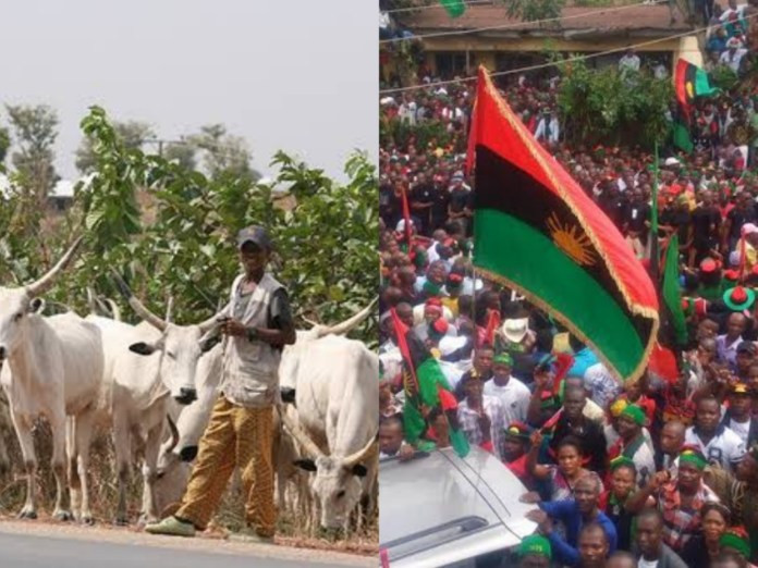 IPOB bans rearing and consumption of 'Fulani' cattle in South-East