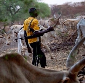 Crops worth millions of naira lost as Fulani herdsmen destroy farms in Osun state