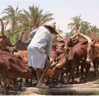 Kaduna Chief Magistrates' Court frees 40-year-old herdsman accused of stealing a cow