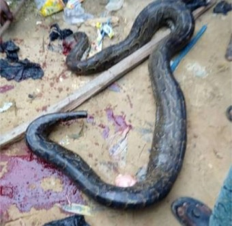 Residents kill giant Python behind a Church in Ibafo (Photos)