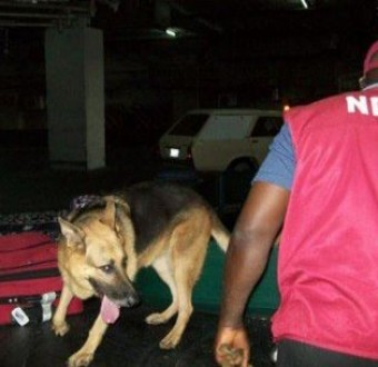 NDLEA raids clubs, hotels for drugs in Oyo State