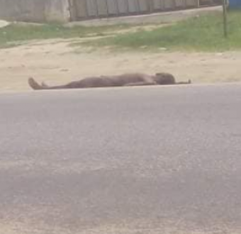 Naked body dumped by the roadside after being hacked to death by suspected cultists